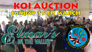 KOI AUCTION - Sunday 15 March 2020 - Swan Valley