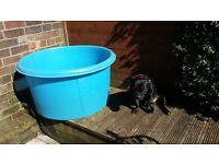 koi carp pond fish large inspection bowl vat hospital tank