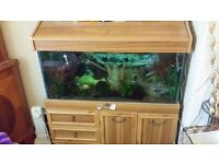 3ft aquarium set up