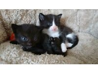 2 Beautiful Male Kittens Looking For Loving Homes