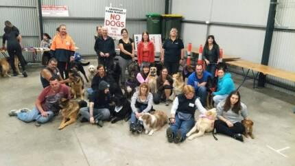 DOG TRAINING GROUP CLASSES