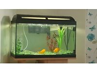 FISH WITH TANK/STAND EVERYTHING...... BARGAIN