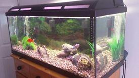 Fish tank 160L