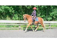 *** 2nd PONY/ PONY CLUB/ WH FOR SALE ***