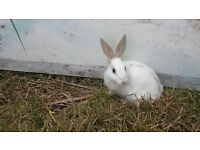 rescue bunnies looking for new homes