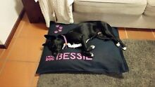 Dog bed covers ( PERSONALISED ) Kingsley Joondalup Area Preview