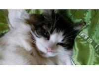 Lindsay K - Cat sitter in SE1 - Cat In A Flat