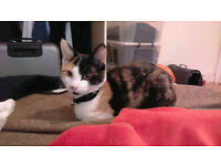 Found: Cat in Haringey off Harringay Green Lanes, Manor House, Tottenham N4 North London England UK