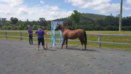 Karma Park Equestrian Services