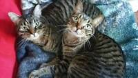 Cat brothers looking for good home.