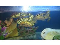 three terrapins looking to be re-homed. Preferably to a sanctuary/rescue home.