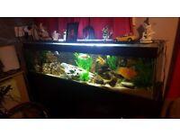 Aquarium tank 5ft