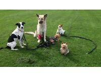 Dog Training, Walking and more