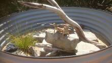 SALE! Reptile Enclosures, Ponds, Snakes, Lizards, Garden Beds Adelaide Region Preview