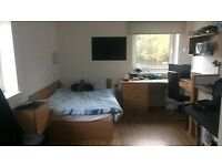 Studio Flat in Exeter ASAP - for students only
