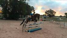 Young thoroughbred - Showjumper potential Oakford Serpentine Area Preview