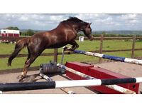 14'3 Pony for Share to stay at Current Yard