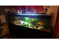 Fish tank 5ft good condition tank and stand
