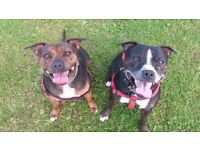Doncaster and the Isle of Axholme dog walking and pet sitting service
