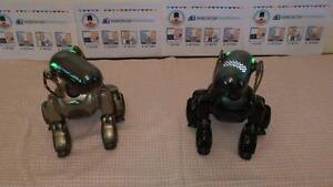 Robot Dogs for Hire in North Brisbane Ashgrove Brisbane North West Preview