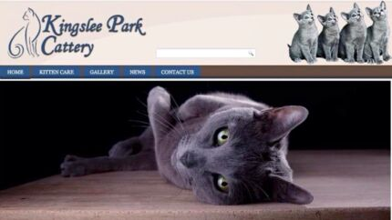 Russian Blue Girls Registered Pure Bred Kittens Penrith Penrith Area Preview
