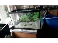 2ft fish tank