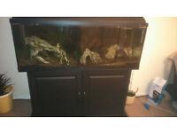 Fish tank 240L