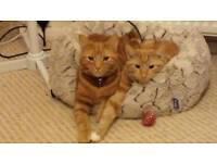 2 male cats need new home