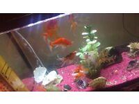 Fish Tank 60l + 10 fishes