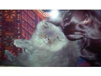 missing Cat Harry