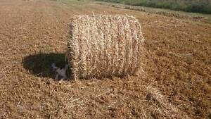 Oaten Hay - Round Bales for sale Meadowvale Bundaberg Surrounds Preview