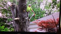 Trees r us Experts 519-817-2867