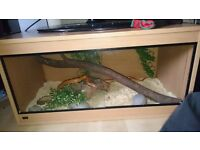 im selling my 4ft viv with corn snake taking offers ?