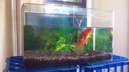 fish tank with accessories Caloundra Caloundra Area Preview
