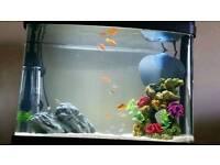 40l fish tank