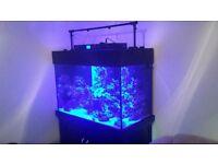 marine aquarium aqua one reef 300l fish tank