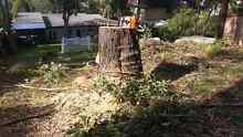 Xtreme tree & stump removal Ryde Ryde Area Preview