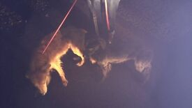 Two dogs found