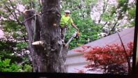 Trees r us Experts 519-817-2867 insure and certified