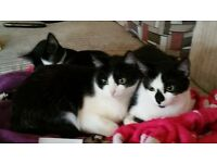 3 cats free to good home