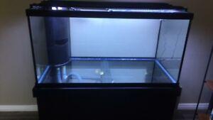 120 gallon fish tank full setup