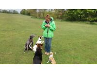 JJs Dog Walking / dog walker + small animal holiday care. pet sitter / pet sitting