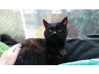 FOUND Black Female Cat - Found Warldorf Road Cleethorpes 20/10/16