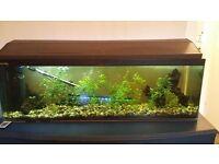 Huge 37 Galleon Aquarium Fish Tank Bundle Filters Lights Chemicals Plants Etc. £150 ONO