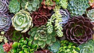 Plant and garden sale this Saturday 25th Moonee Ponds Moonee Valley Preview