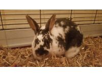 2 Female Bunnies for rehoming