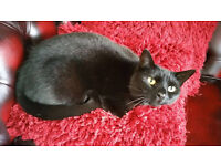 Professional caring and also fun family run cat other pet sitting and dog walking services