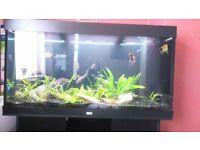 Juwel Rio 350 Aquarium