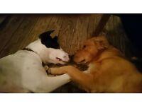 Pet Sitter/Dogwalker