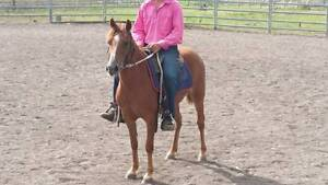 """Charlotte"" Great Kids Pony Badgerys Creek Liverpool Area Preview"